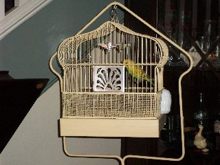 Birdcage in the living room